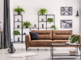 Interior design created by plant lover, different kind of plower